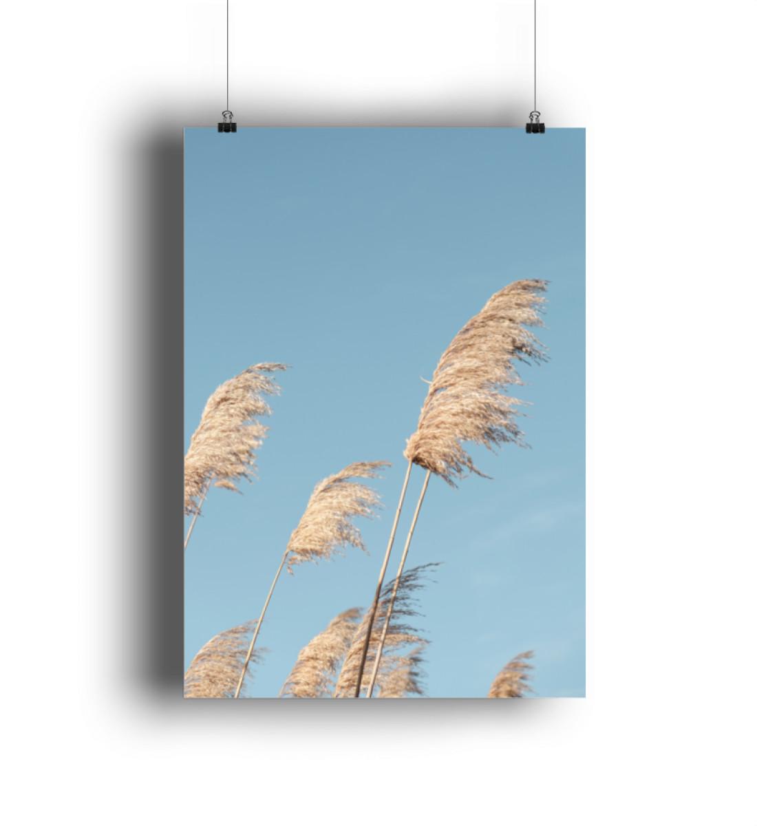 Gräser im Wind - DIN A1 Poster (hochformat)-3